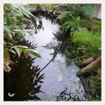 pond - Photo P Perry 2011