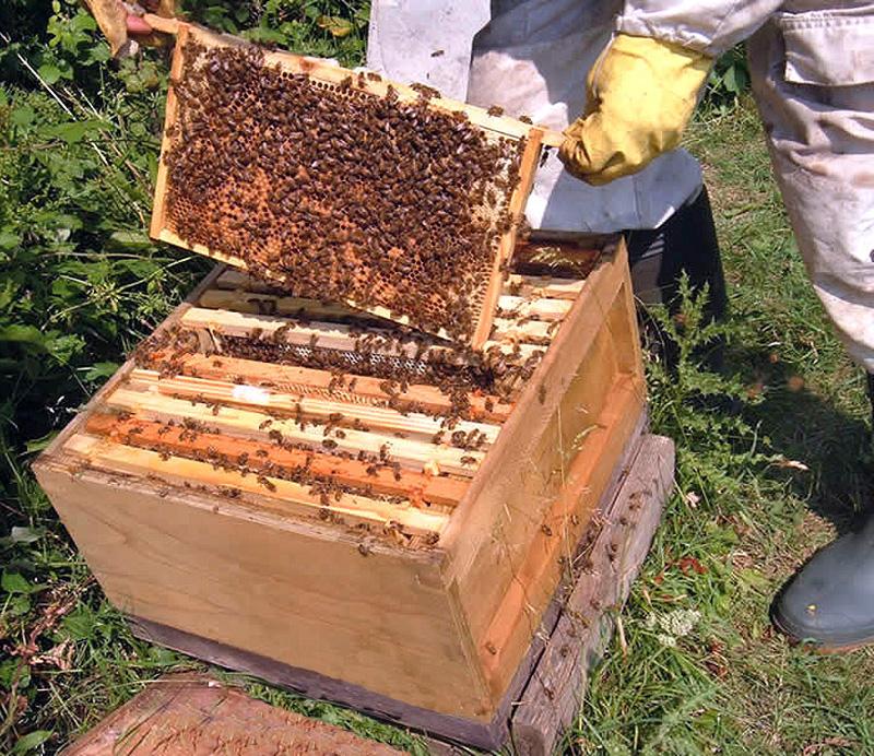 1 Honeybee Origins And Beehives 171 Pinner Amp Ruislip