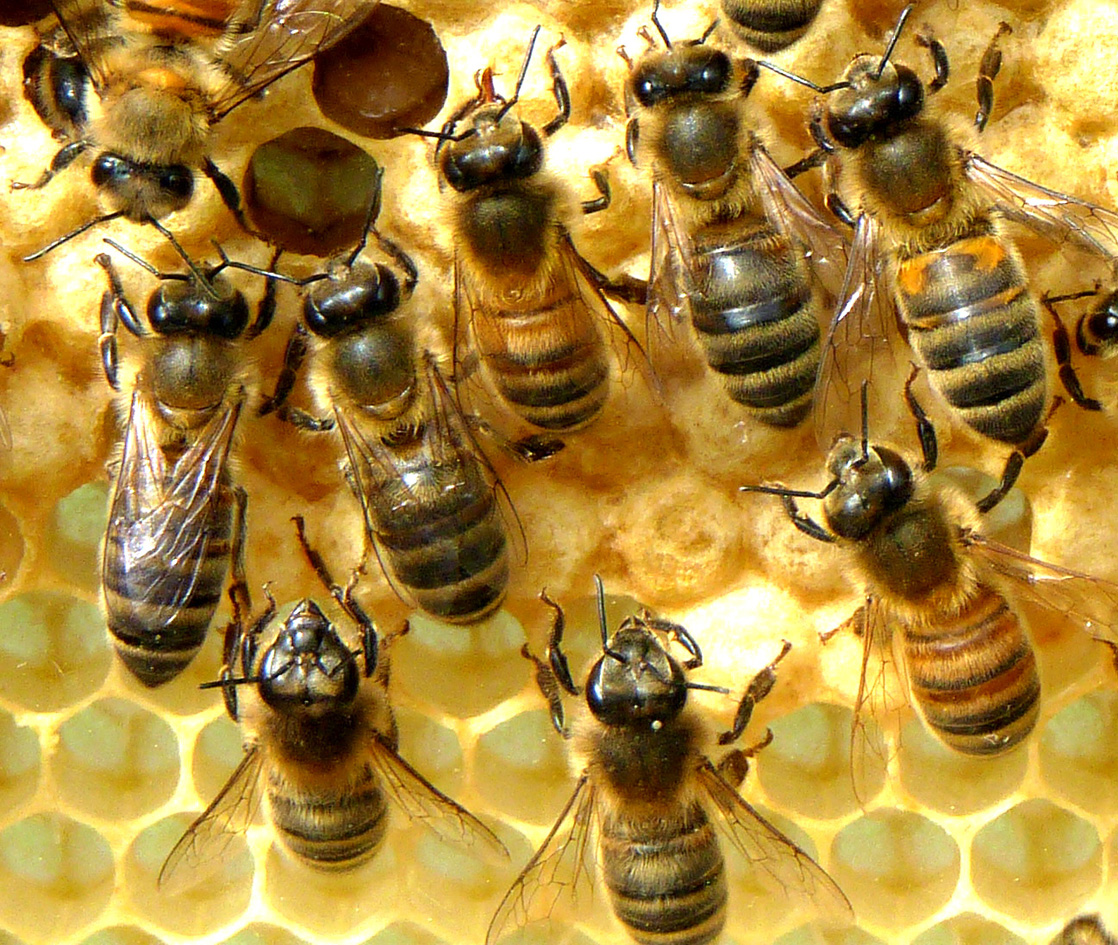 why drones are good with  on Bee Buzz Interesting Things To Know About Bees During National Honey Bee Month besides Tips Follow Buying Drone further Why Is Good Record Keeping Important To Successful Farm Management furthermore Article4465824 additionally petitors.